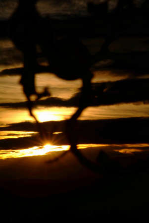 a branch from an appletree by sunset Stock Photo