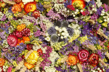 sea of coloured dried flowers and blossom