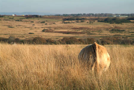 a cow on meadow by blue sky