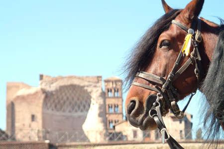 head of a horse infront ruine and blue sky