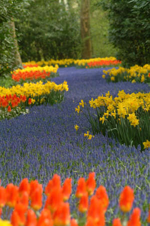 sea of tulips in the colours red yellow blue and green Stock Photo