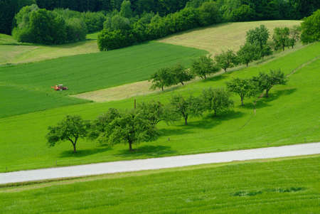red tractor on a green field with trees and a country road Stock Photo