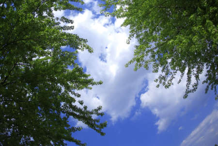 green trees in front of blue sky with white clouds Stock Photo
