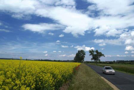 driving white car beside blooming colzafeeld under blue sky