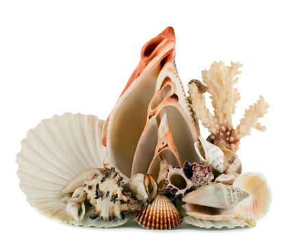 seashell in shellfish  sea decoration Stock Photo - 4603469