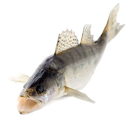 pesce walleye Archivio Fotografico - 5119122
