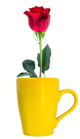 Red rose in Yellow cup isolated on a white background photo