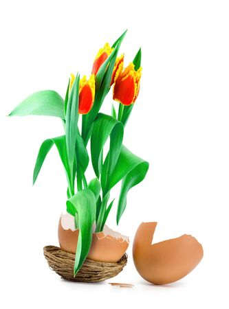 tulips growing from easter egg photo
