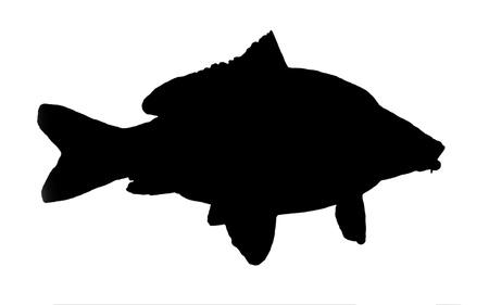 silhouet van vis van de karper Stockfoto