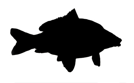silhouette of fish of the carp