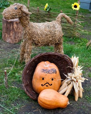 nanny goat: livestock - nanny goat,fence,pumpkin,corn background