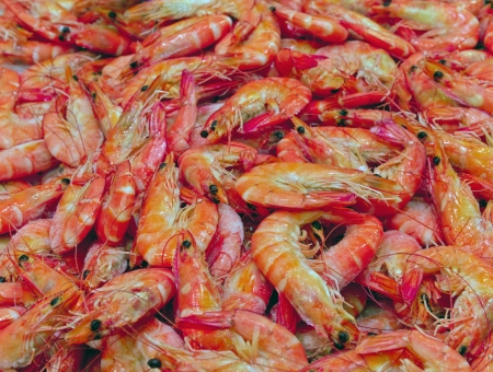 Prawn - sea food on ice background Stock Photo - 16712427
