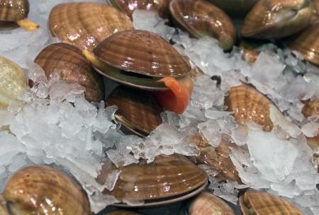 seashells - sea food on ice background Stock Photo - 16712424
