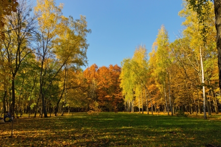 Fall forest landscape - Autumn park photo