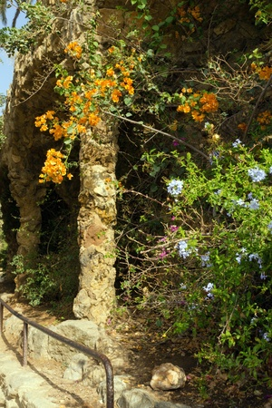 flowerses: flowerses on stone gallery in the park Guell in Barcelona - Spain