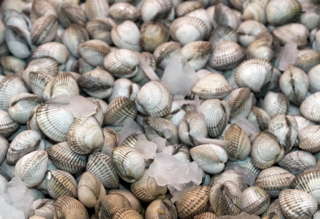 fresh cockles - sea food on ice background Stock Photo - 17087351
