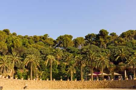 Palm on stone wall in the park Guell in Barcelona - Spain photo