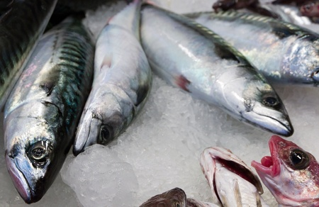fresh fish in ice at the market Barcelona Stock Photo - 17308384