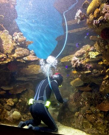 diver cleans aquarium, Barcelona, Spain Stock Photo - 17472596
