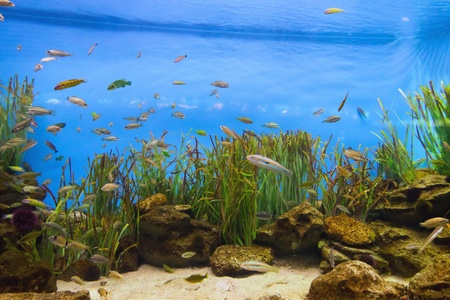 Fish tropical life in coral reef Stock Photo - 17472674