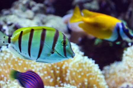 Tropical fish life in coral reef aquarium Stock Photo - 17630714