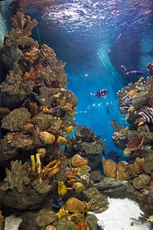 Falling light to the fish swims over a coral reef life in sea Stock Photo - 18245300