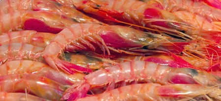 seafruit: Background of fresh cooked  heap prawns