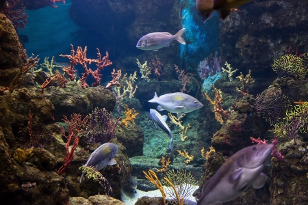 fish tank: adventure color beauty fish life in sea Stock Photo