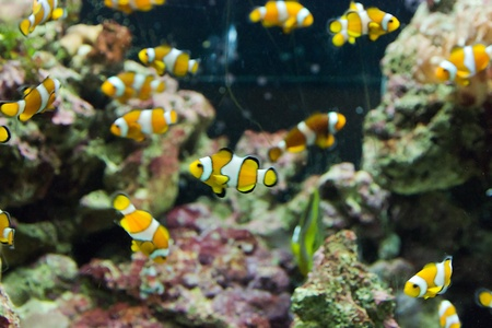 beauty color fish life in coral reef Stock Photo - 19017461
