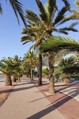 Palm tree on blue sky on street Barcelona, SPAIN photo