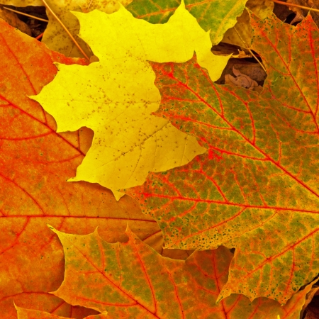 autumn foliage natural background photo