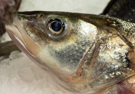 sparus: fish on ice - fresh  seafood supermarket Stock Photo