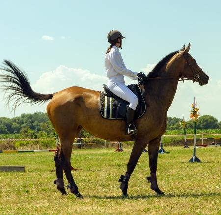 brown horse and jockey outdoors photo