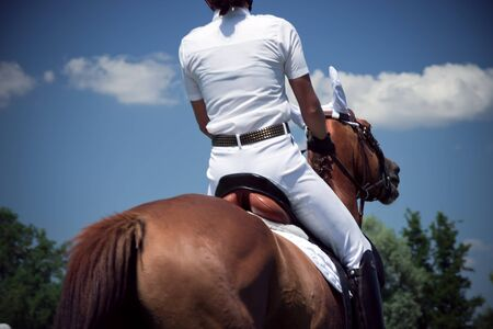 dressage brown horse and rider  photo