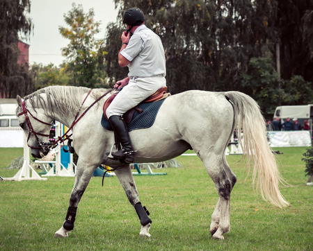 Portrait of a show jumping horse. Horse and rider. photo