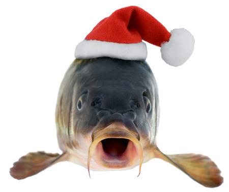 pez carpa: la carpa de pescado en Santa Claus sombrero rojo aislado en fondo blanco Foto de archivo