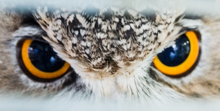 look owl eagle very close up detail face photo
