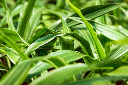natures: green background leaf natures