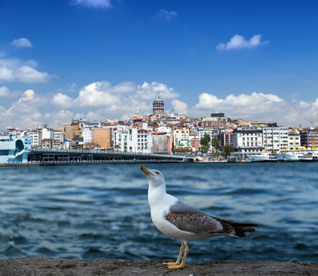 istanbul: sea gull and landscape Golden Horn in Istanbul. Turkey