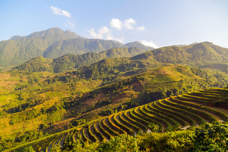 bali province: Landscape of Terraced Rice Field hill Sa Pa. Lao cai province northern Vietnam