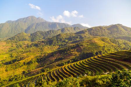 sa: Landscape of Terraced Rice Field hill Sa Pa. Lao cai province northern Vietnam