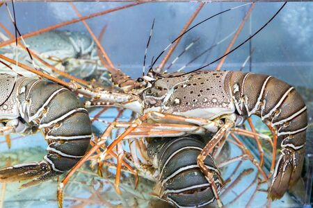 sea food: lobster under water - Sea food Stock Photo