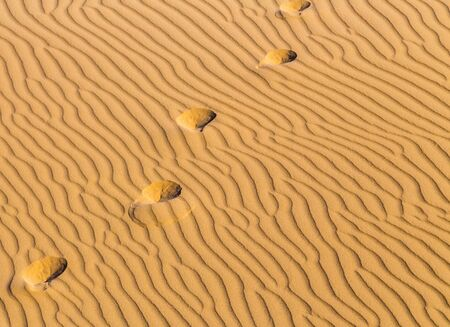 thar: Traces on the crest of a dune in desert