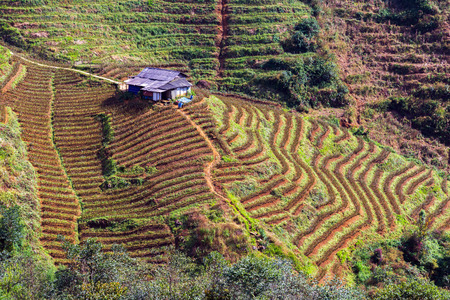 bali province: Terraced Rice Field hill Sa Pa. Lao cai province northern Vietnam Stock Photo