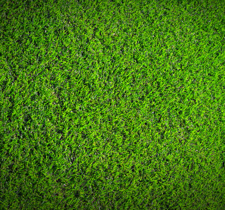green field: Green grass nature background texture