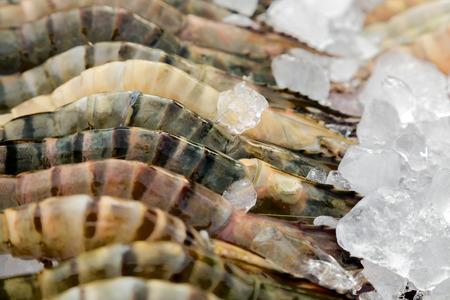 tiger shrimp: Tiger shrimp ice in seafood market Stock Photo
