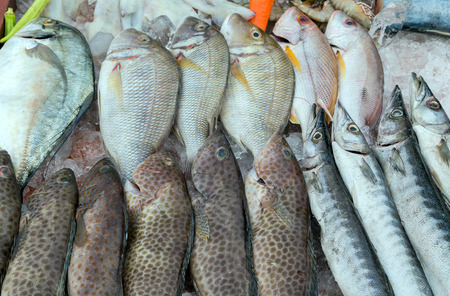 refrigerate: Fresh fish on ice for sale at market
