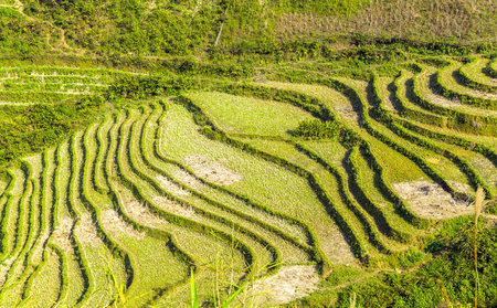bali province: Landscape Terraced Rice Field hill Sa Pa. Lao Cai province northern Vietnam