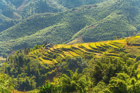 bali province: Landscape of agriculture Terraced Rice Field hill Sa Pa. Lao cai province northern Vietnam