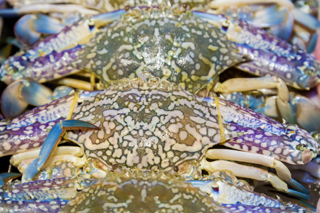 blue swimmer crab: Blue crab, Blue swimmer crab, Blue manna crab seafood close-up in fish market